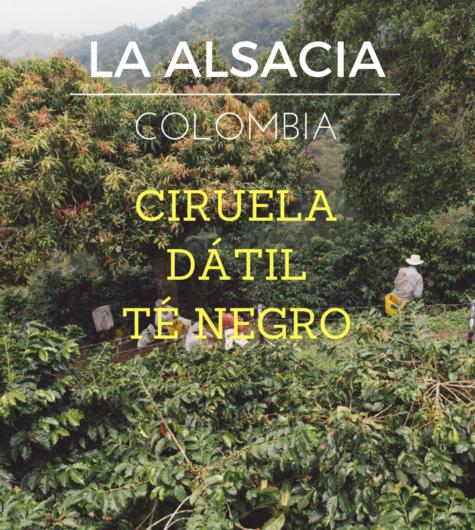 LA ALSACIA (3)